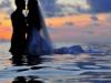 vizi esküvő
